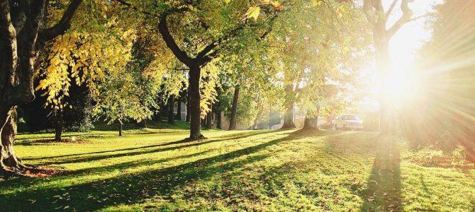 Trädfällning i Norrtälje